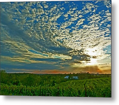 Metal Print featuring the photograph Vineyard Sunset I by William Fields