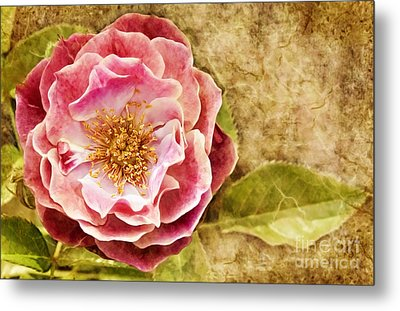 Metal Print featuring the photograph Vintage Rose by Cheryl Davis