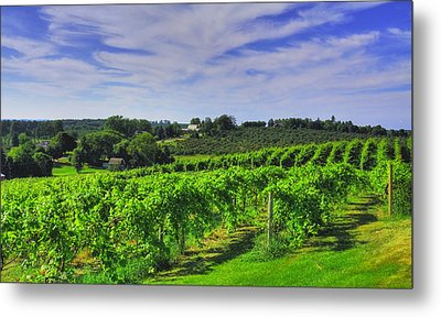 Metal Print featuring the photograph Vinyard View by Coby Cooper