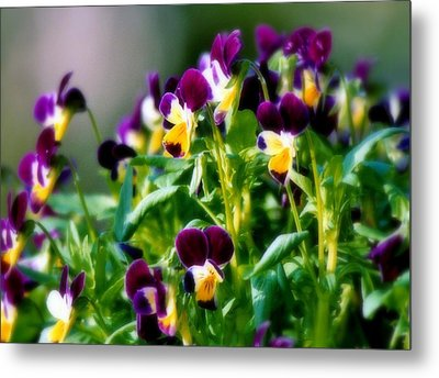 Viola Parade Metal Print by Karen Wiles