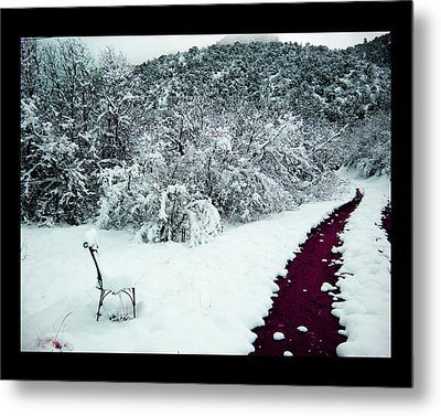 Metal Print featuring the photograph Violet Passage by Susanne Still