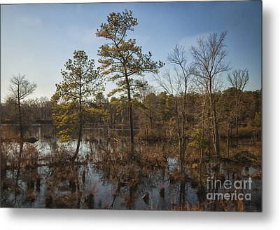 Metal Print featuring the photograph Virginia Swamp by Jim Moore