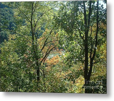 Virginia Walk In The Woods Metal Print by Mark Robbins
