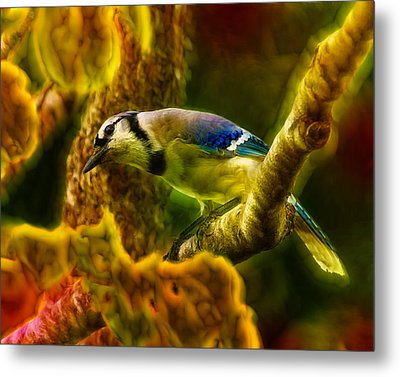 Visions Of A Blue Jay Metal Print by Bill Tiepelman