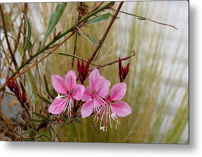 Visiting The Pink Guara Metal Print