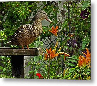 Metal Print featuring the photograph Visitor To The Feeder by William Fields