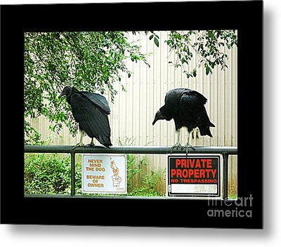 Metal Print featuring the photograph Vultures Guarding Property by Renee Trenholm