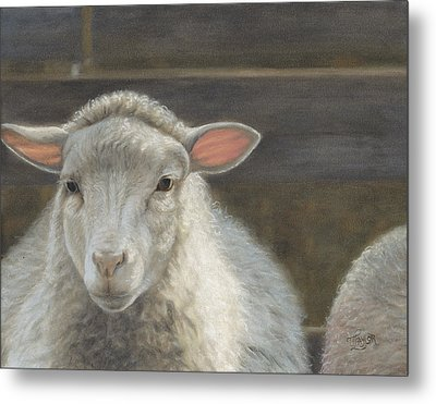 Waiting For The Shepherd Metal Print