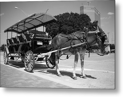 Waiting Mule Metal Print by Irvin Louque