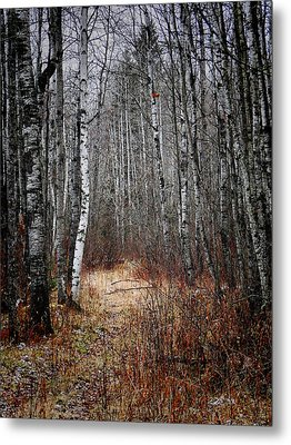 Metal Print featuring the photograph Walk In The Forest by Blair Wainman