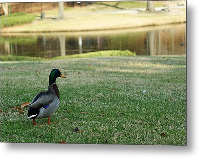 Walk In The Park Metal Print by GuitarGeeks Photography