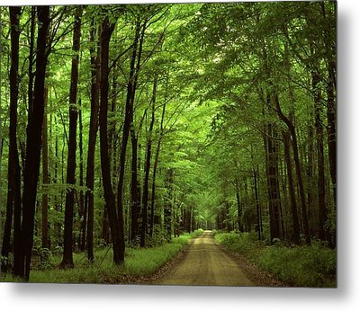 Walking Away Forest Path  Metal Print by ilendra Vyas