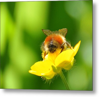 Metal Print featuring the photograph Walking On Sunshine by Ronda Broatch