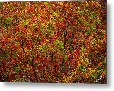 Wall Of Red Metal Print by Ed Smith