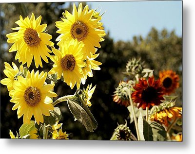 Waltz  Metal Print by Tammy Cantrell