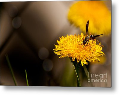 Wasp And Flower  Metal Print