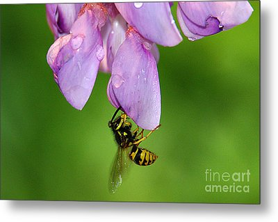 Metal Print featuring the photograph Wasp N Bloom by Jack Moskovita