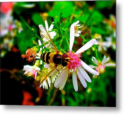 Wasp On Flower Metal Print by Andre Faubert