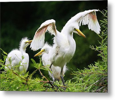 Watch And Learn Metal Print by Paulette Thomas