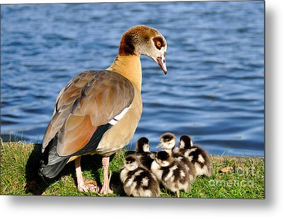 Watch Over You Metal Print by Lisa Williams
