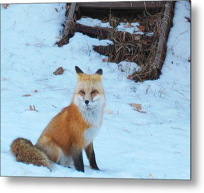 Watching Traffic Metal Print by Tammy Sutherland