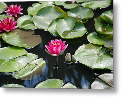 Metal Print featuring the photograph Water Lilies by Jennifer Ancker
