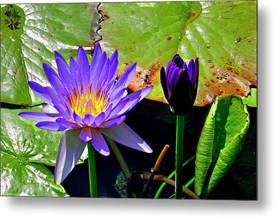 Metal Print featuring the photograph Water Lillies by Helen Haw
