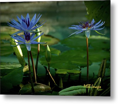 Water Lillies Metal Print by Margaret Buchanan
