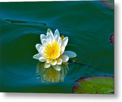 Water Lily 4 Metal Print by Julie Palencia