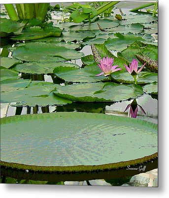 Water Lily Land IIi Metal Print by Suzanne Gaff