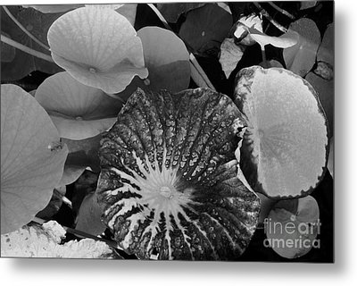 Metal Print featuring the photograph Water Lily Leaf by Jasna Gopic