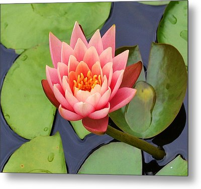 Water Lily Metal Print by Mary Zeman