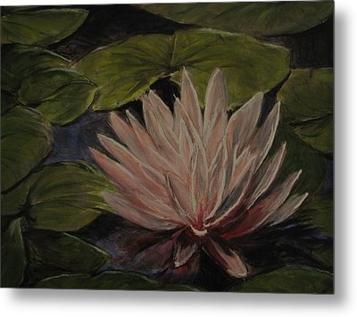 Water Lily Metal Print by Sherry Robinson