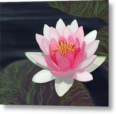 Water Lily Metal Print by Tim Stringer