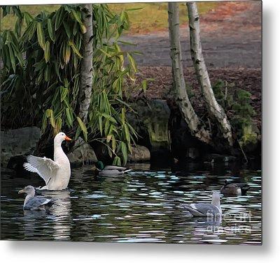 Waterbirds Metal Print by Billie-Jo Miller