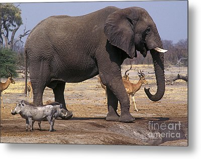 Metal Print featuring the photograph Watering Hole - Savuti Marsh Botswana by Craig Lovell