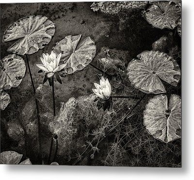Waterlilies In Sepia Metal Print by Marion McCristall