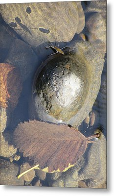 Waterstrider At Rest Metal Print