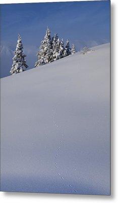 Weasel Tracks In The Snow Metal Print by Tim Grams