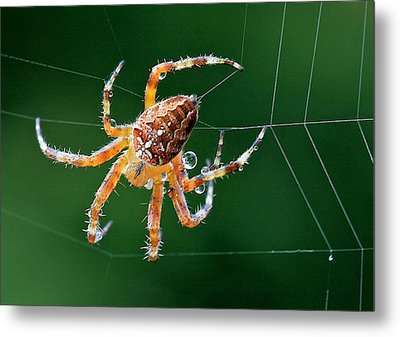 Web Maker Metal Print by Scott Holmes