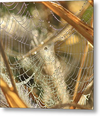 Web Of Jewels Metal Print by Penny Meyers