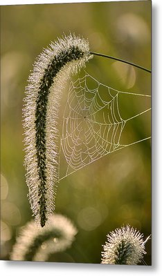 Webbed Tail Metal Print