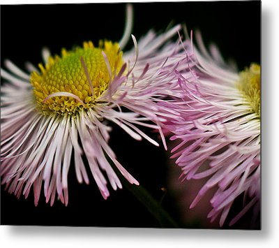 Weeds Metal Print by Susie DeZarn