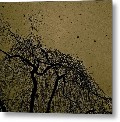 Weeping Willow In Winter Metal Print