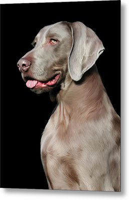 Weimaraner  Metal Print by Julie L Hoddinott