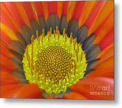 Well-disposed Metal Print by Tina Marie