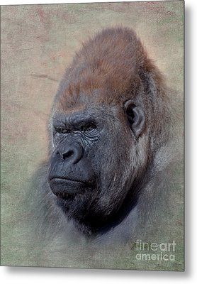 Western Lowland Gorilla Metal Print by Betty LaRue