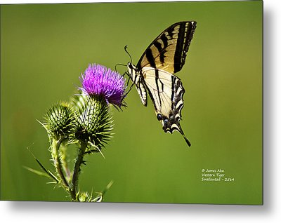 Western Tiger Swallowtail - Milkweed Thistle 2564 Metal Print by James Ahn
