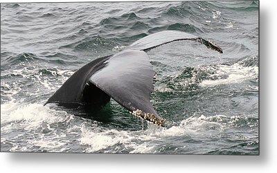 Whale Tale Metal Print by Tammy Bullard