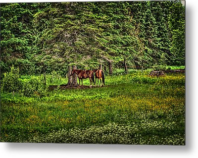 What A Life Metal Print by Gary Smith